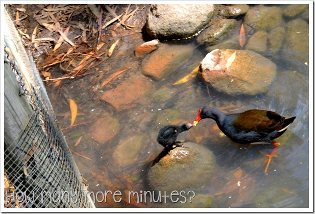 Billabong Sanctuary | How Many More Minutes?