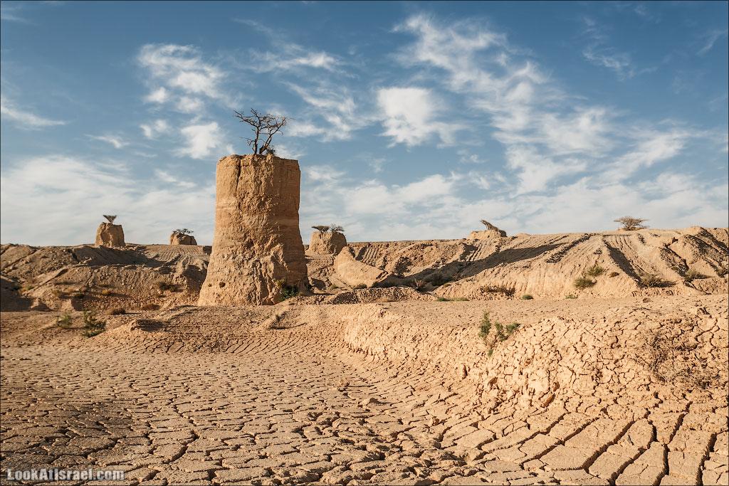 Акации на столбах в пустыне Арава | LookAtIsrael.com - Фото путешествия по Израилю