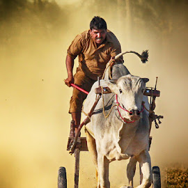 Gulha by Abdul Rehman - Sports & Fitness Other Sports ( expression, natural light, sand, bull cart, rural sport, bull, ox, rural, rally, pakistan, punjab, dust cloud, dust )