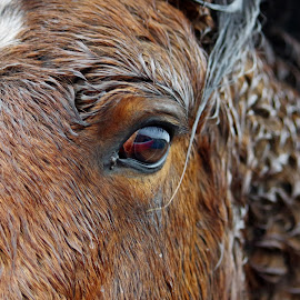 Wild Pony on a Wet Day by Ingrid Anderson-Riley - Animals Horses