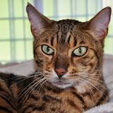 2014-7 gatti
