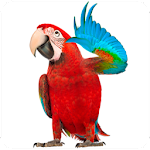 Real Talking Parrot 1.3 Apk