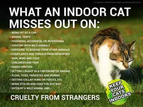 Raina 39 s cat rescue what an indoor cat misses out on for Having an indoor cat