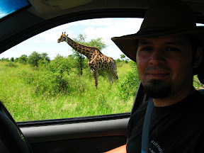 I got this cool hat (made out of water buffalo hide) while we were in Kruger. And there's a giraffe standing behind me.