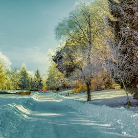 Frozen park by Opreanu Roberto Sorin - City,  Street & Park  City Parks ( snowfall, footpath, hoar frost, frost, way, road, frozen, landscape, alley, city, nature, cold, tree, pine tree, ice, january, snow, cold temperature, path, weather, walkway, park, beautiful, white, snowy, forest, december, magic, winter, february, season, outdoor, background, trees, scene, sun light )