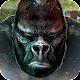 Monkey Kong ? Gorilla Skull