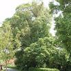 Fietsdag2005 0023.jpg