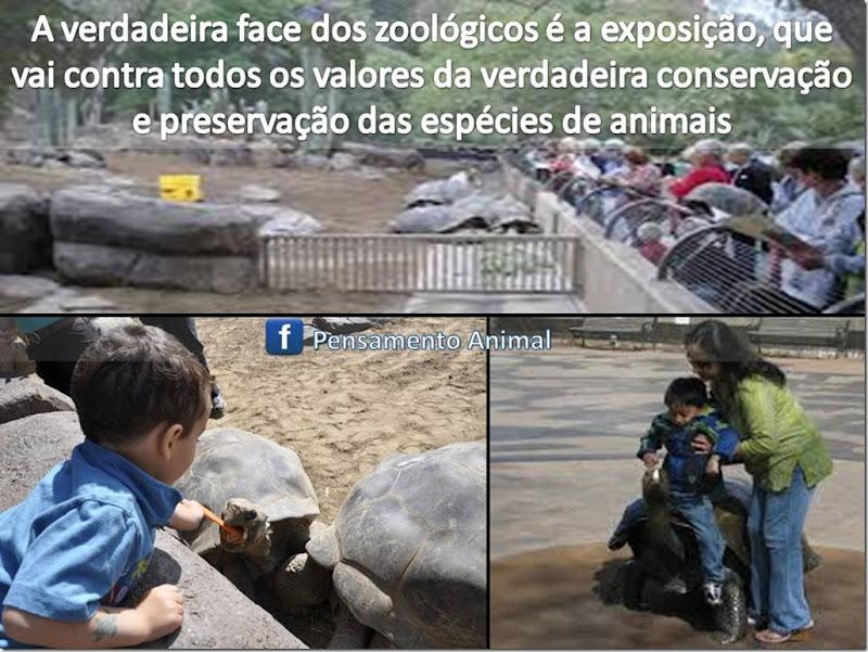 zoo-exposicao
