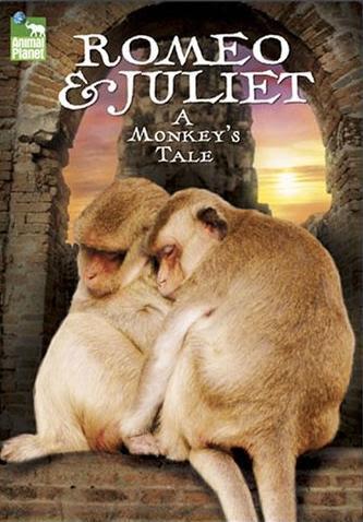 Romeo i Julia: Opowie¶æ o ma³pach / Romeo & Juliet: A Monkey's Tale (2008) PL.720P.HDTV.x264 / Lektor PL
