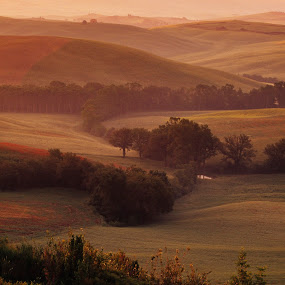 Warm Tuscan Sunrise by Gale Perry - Landscapes Prairies, Meadows & Fields ( vertical, warm colors, reds, tuscany, sunrise, villa on distant hill, golds,  )