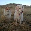Urlaub Holland Stella und Cathy 2.jpg