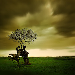 pohon-galau.jpg