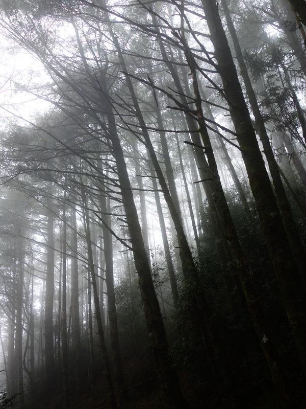 2013_1126-1129 鹿林山-1_224