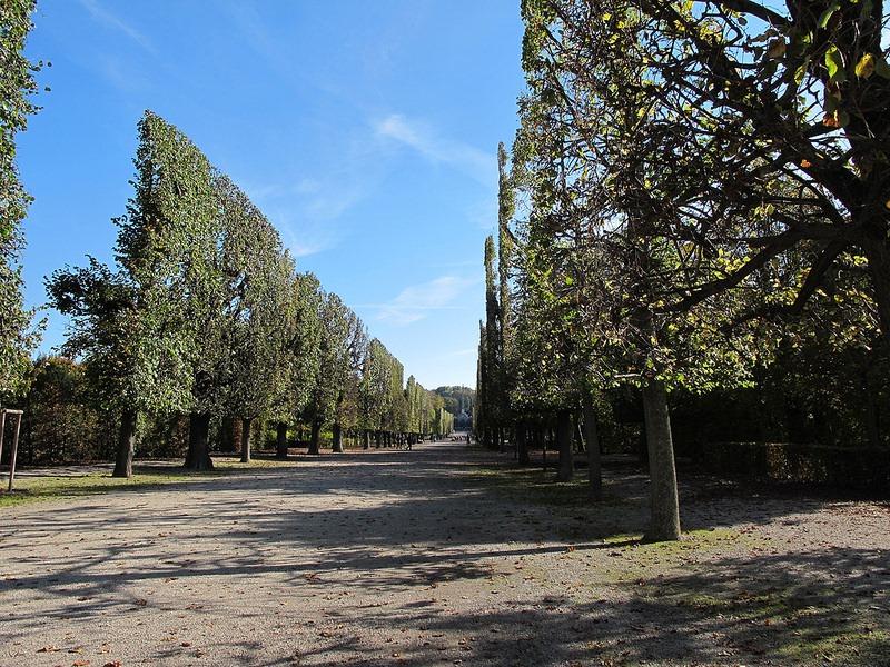 schönbrunn-palace-trimmed-trees-10