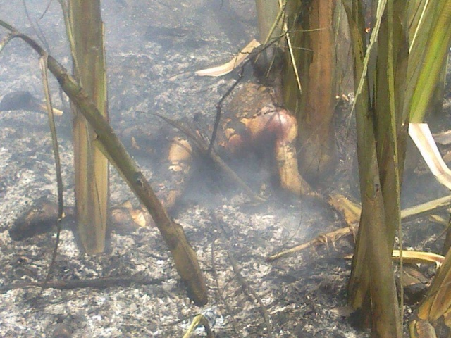 PHOTOS: Over 100 Die In Nnewi Gas Plant Explosion 9