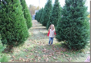 Zoey running through the Christmas trees11