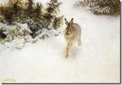 800px-Bruno_Liljefors_-_Winter_Hare