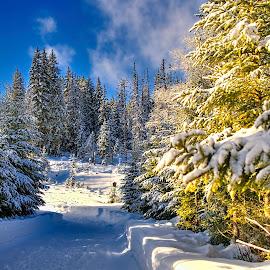 Snow by Vladimir Gergel - Landscapes Forests
