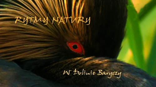 Rytmy natury. W Dolinie Baryczy (2011) PL.TVRip.XviD / PL