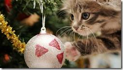 77- gatos navidad (7)- buscoimagenes