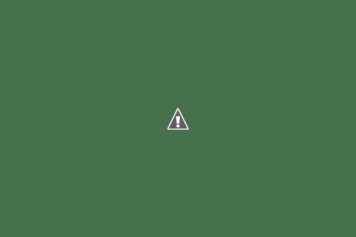 Каменные грибы Алтай