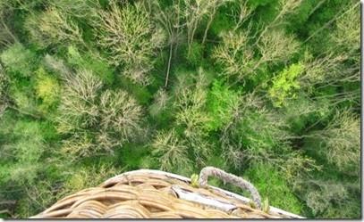 3 Wald von oben