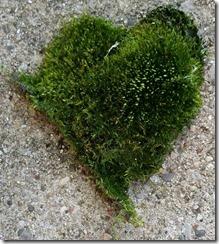 Moss Heart, 20150722_092143
