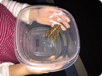 Elaine's Toad