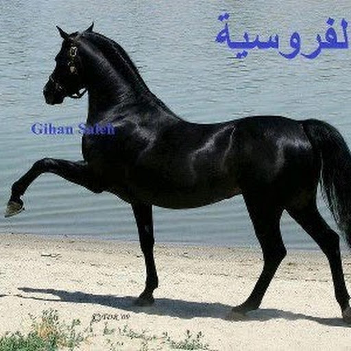نيك سعودية من طيزها http://sharamitarab.blogspot.com/2010/05/blog-post_7670.html