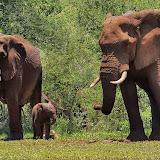 ElephantExperience
