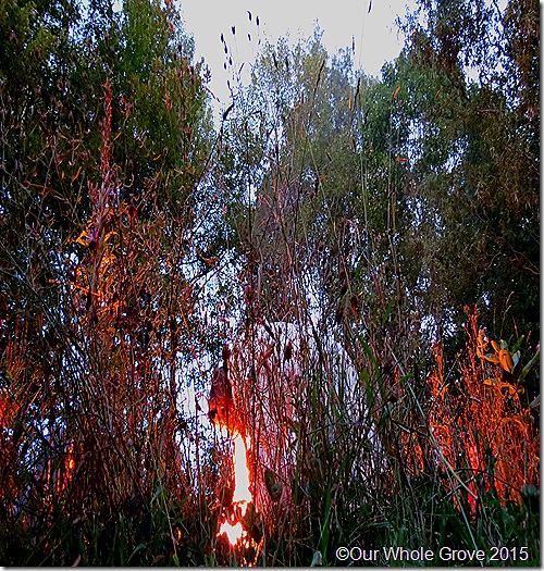 Ritual portal posture,Fire