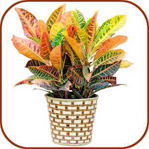 House Indoor Plants Android Apps On Google Play