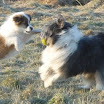 Buffy 11.2.12 Feld mit Willow.jpg