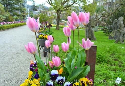 Glória Ishizaka - Hortus Botanicus Leiden - 62