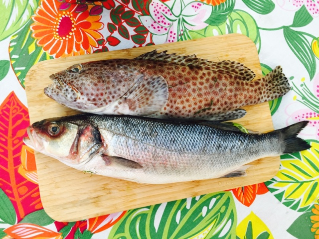 Brown spotted grouper and wild sea bass ready for BBQ