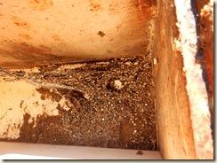 larvae frass and webbing