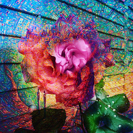 the eye of the flower by Josiah Hill-meyer - Digital Art Abstract ( love, rose, life, transformstion, colorful, psychedelic, light, visionary art, photography )