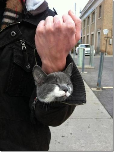 gatos sitios para esconderse (13)