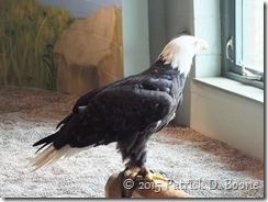 Eagle02