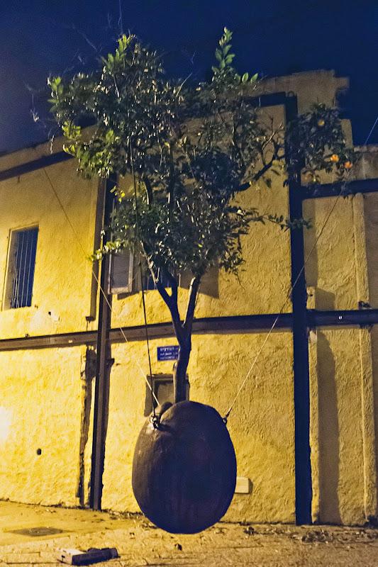 Drzewo Pomarańczowe w Starej Jaffie