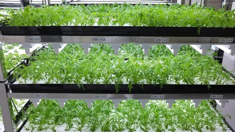 toshiba-lettuce-shelves-1