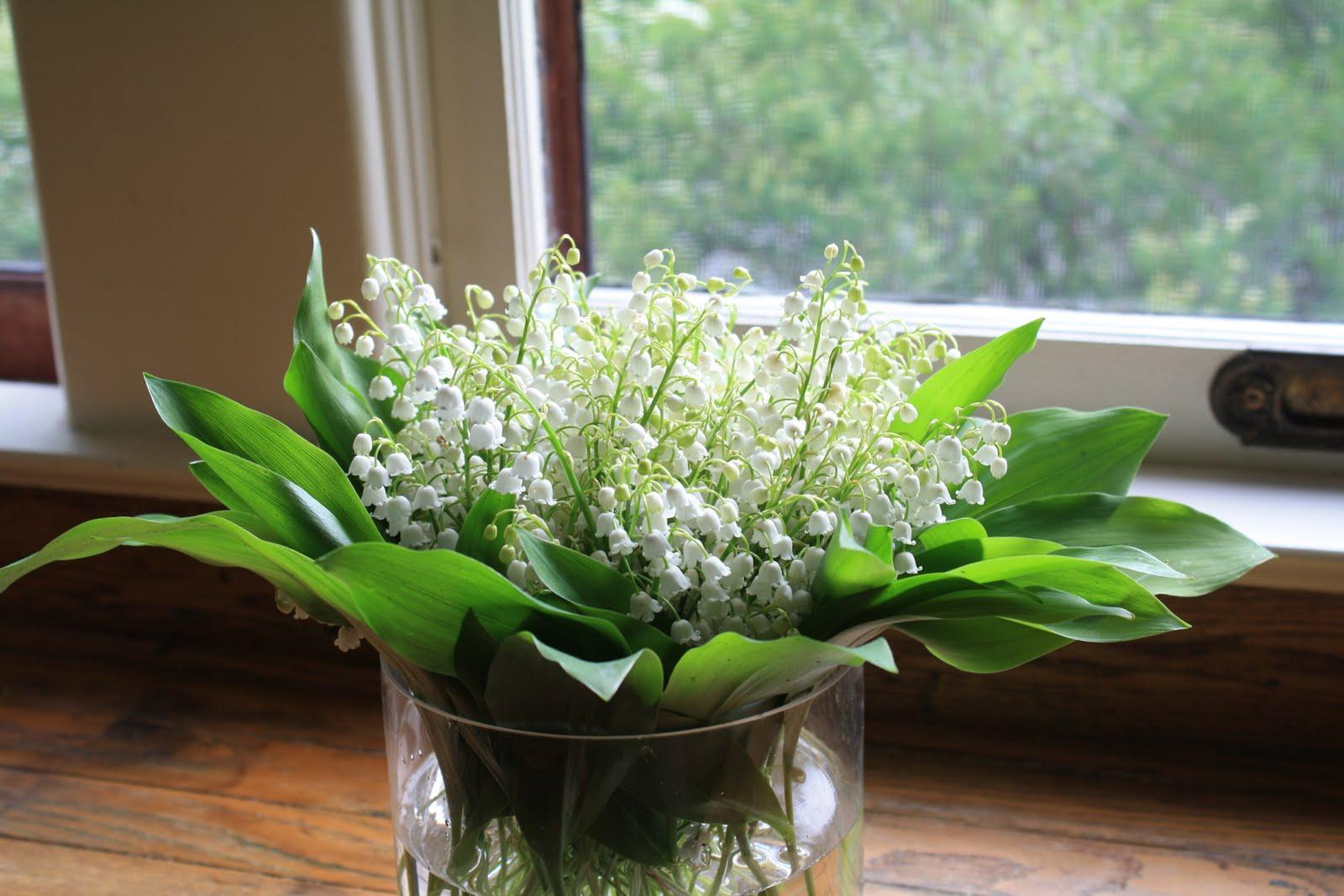 Now that my Lily of the Valley