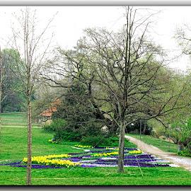 Berlin by Francesca Riggio - City,  Street & Park  City Parks ( park, nature, green, germany, flowers )
