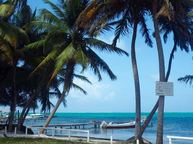Palm trees at the beach on Caye Caulker, Belize