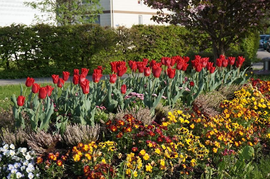Весна в Фюссене