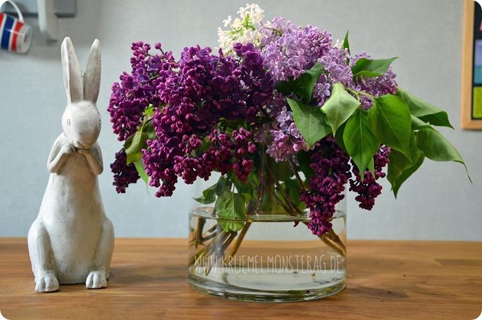 Flieder (07) in lila, flieder und weiß aus dem Garten