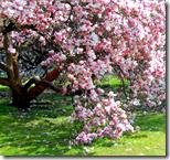 [flowers on trees]