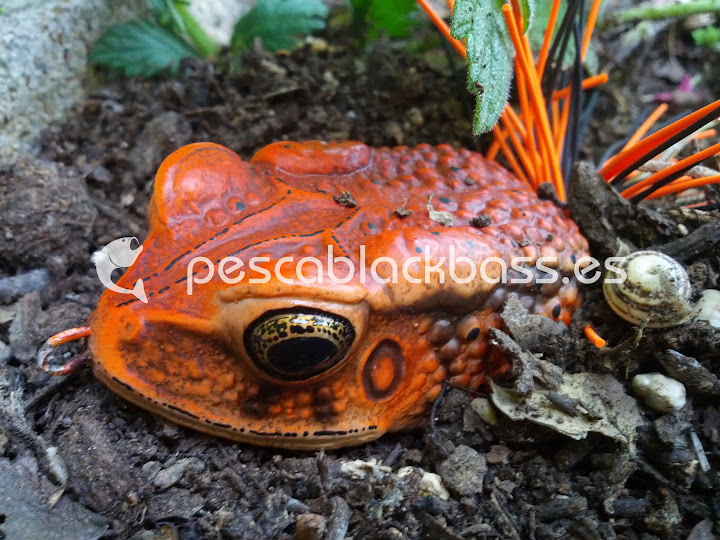 MegaFrox Giant Toad