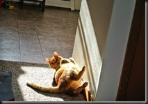 Cat walking up from Comma inducing sunbeam.