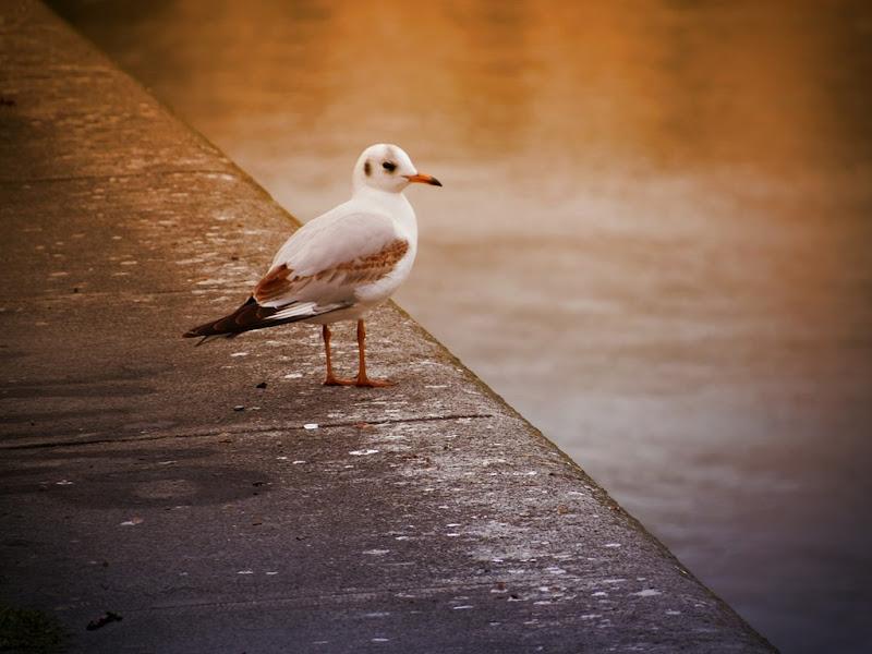 seagull-614236_1280